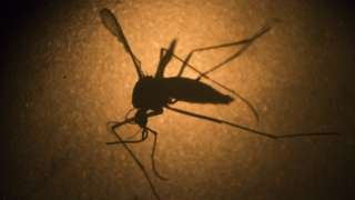 Germany confirms five Zika virus cases